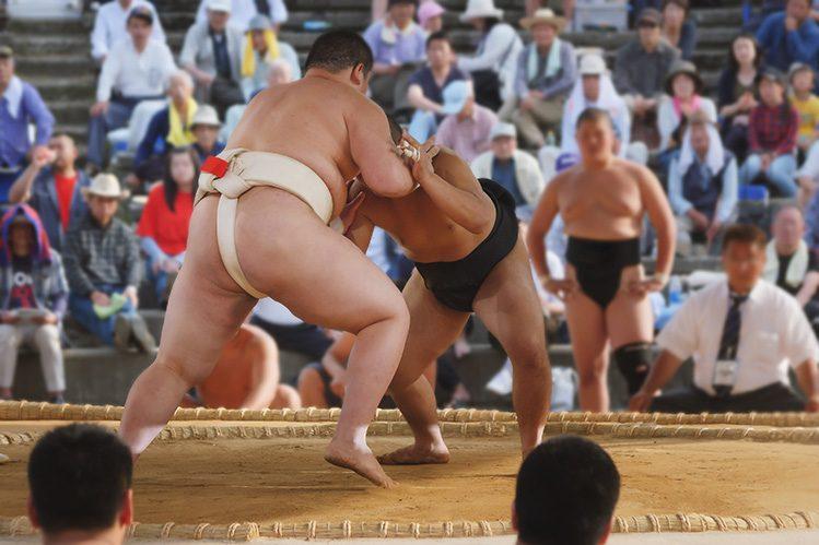 combat sumo japon activités