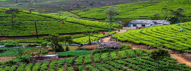 Sri Lanka: les spécialités à goûter