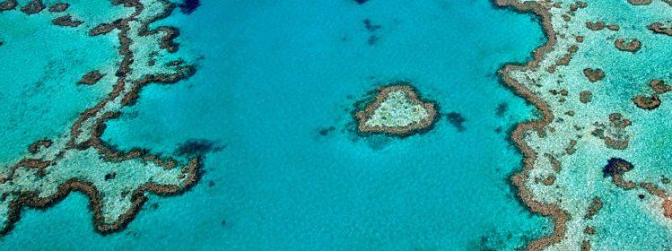 Australie: où plonger sur la côte est?