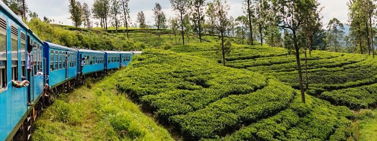 Que faire au Sri Lanka: 10 activités
