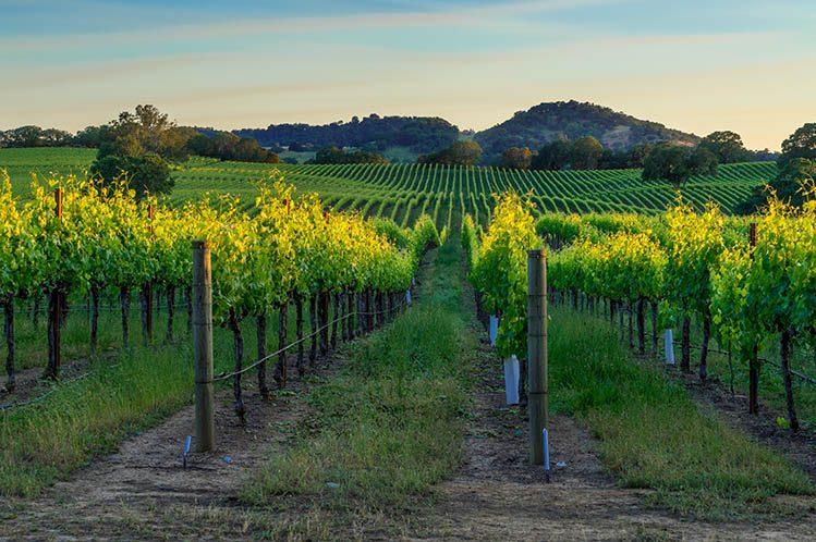domaine viticole vin Californie Sonoma activités