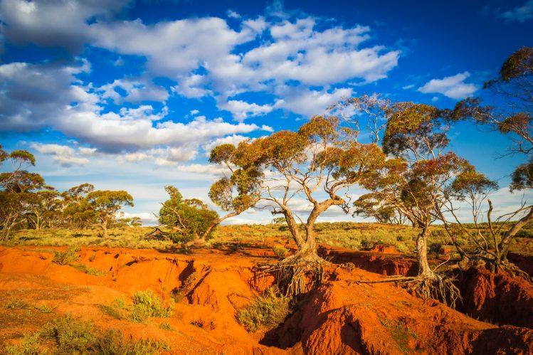 australie outback cinema film