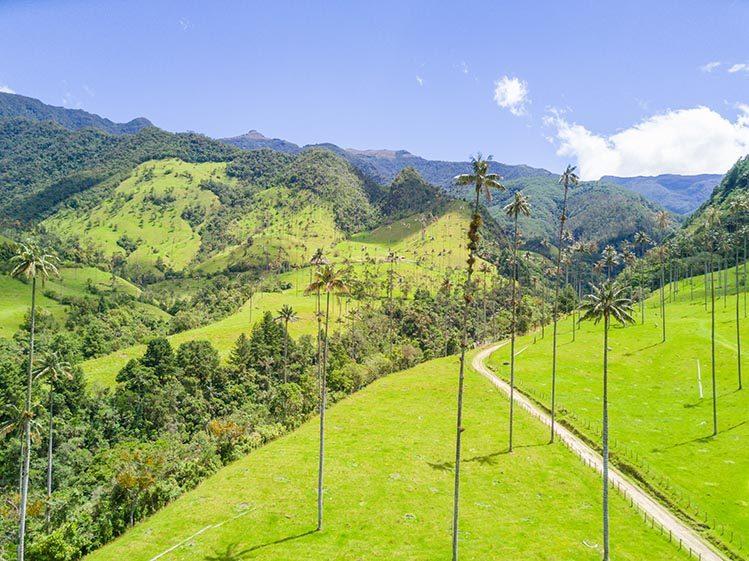 Palmiers à cire vallée de Cocora Colombie paysages étonnants