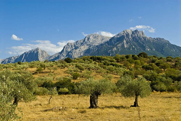 Le massif du Gennargentu Sardaigne randonnee