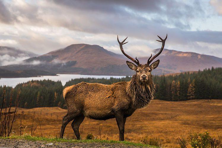 observation animaux écosse highlands activités