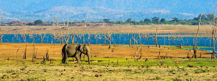Sri Lanka: où voir des animaux?