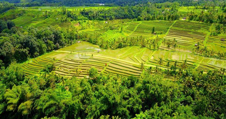 rizieres jatiluwih bali lombok incontournables