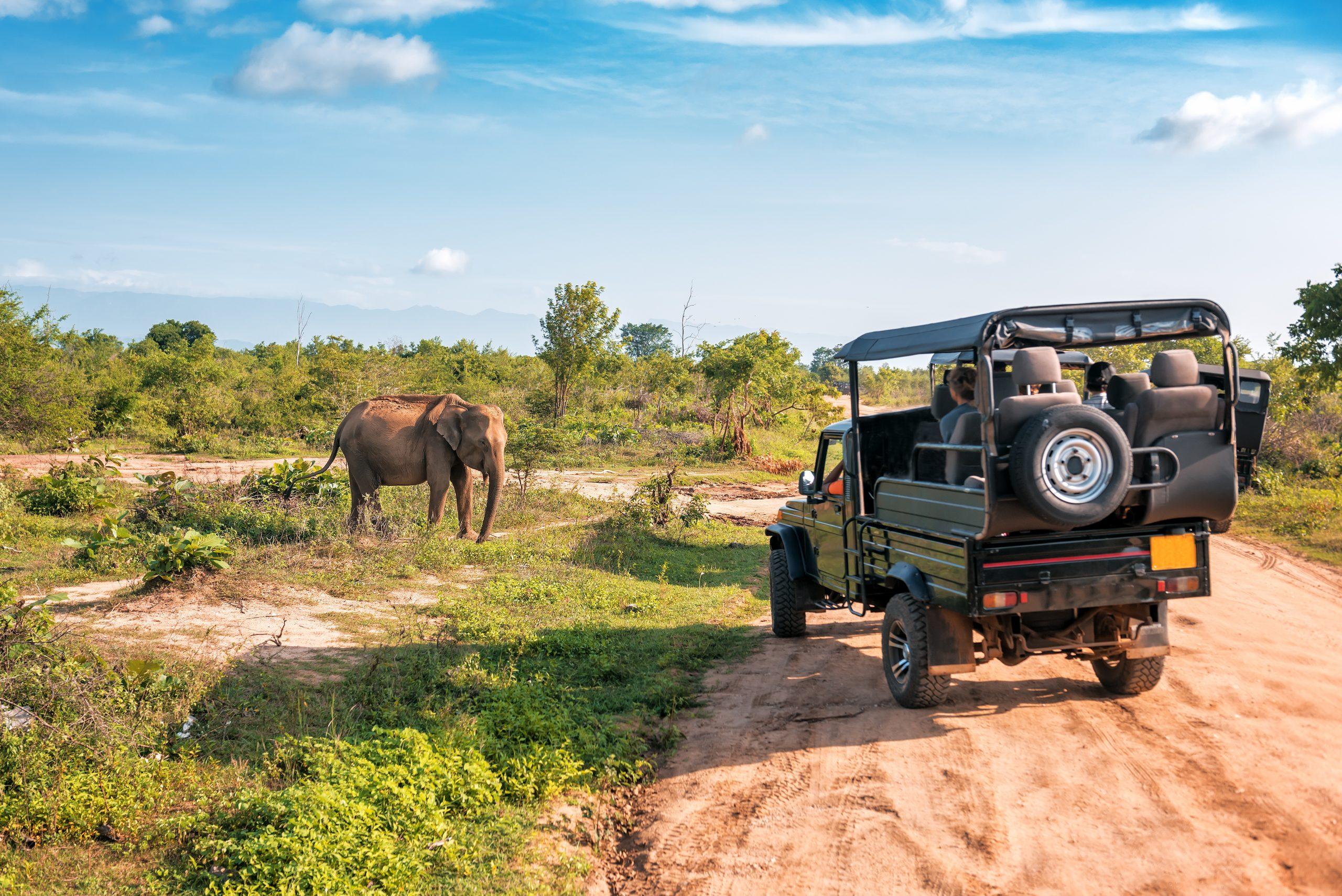 safari elephant udawalawe sri lanka activites