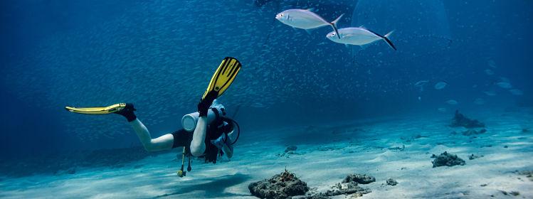 Martinique: les plus beaux spots de plongée